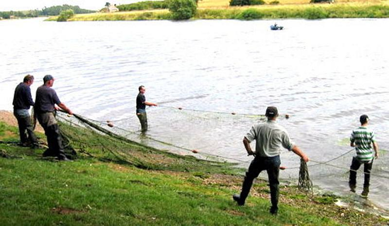 Salmon Netting below Paxton House