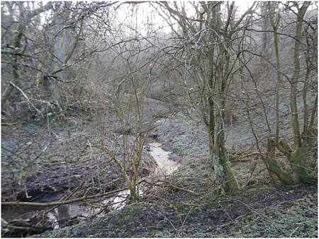 Norham Mill Burn 2