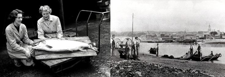Salmon Fishing banner